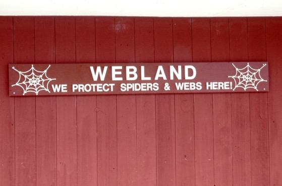 spider sanctuary