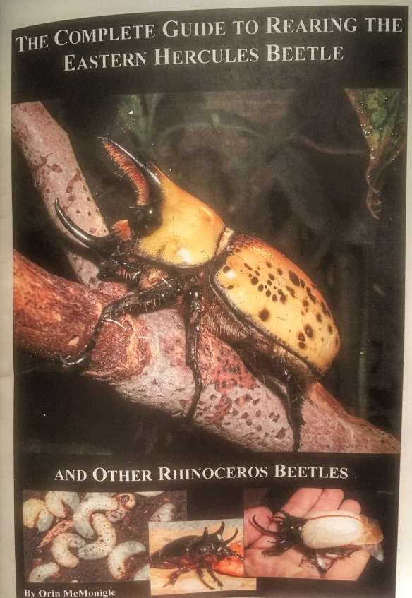 Raising Hercules Beetles guide