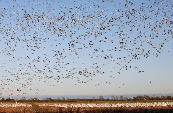 birds in front fields