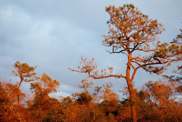 sunset glow on trees