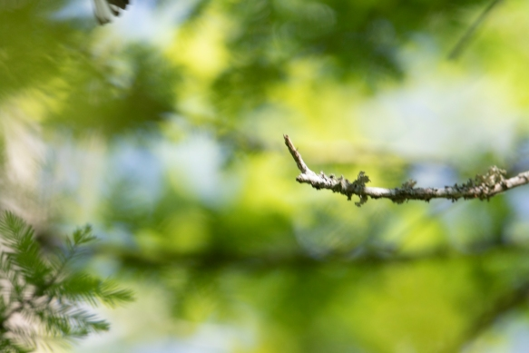bad warbler shot