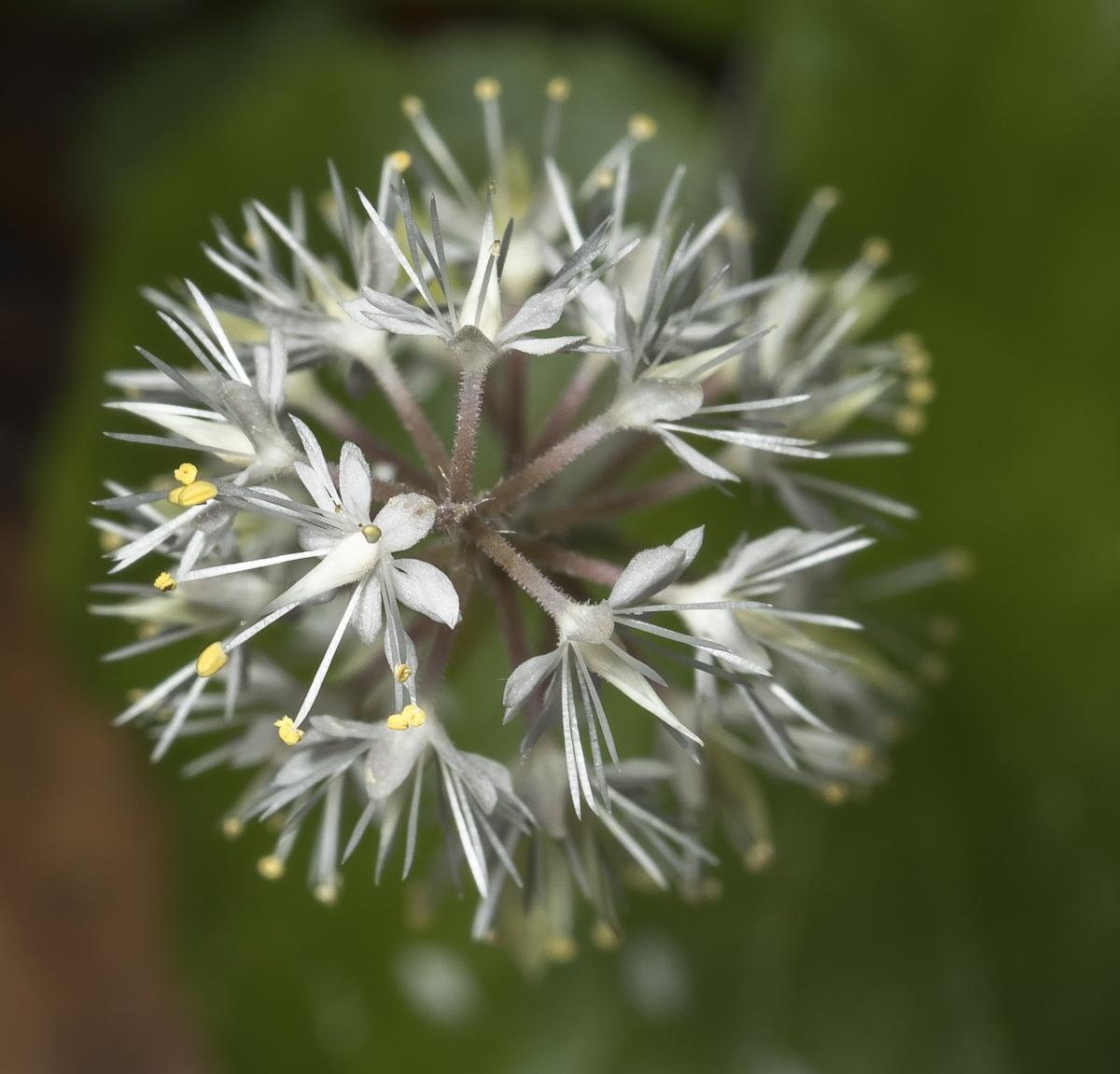 top view of foam flower