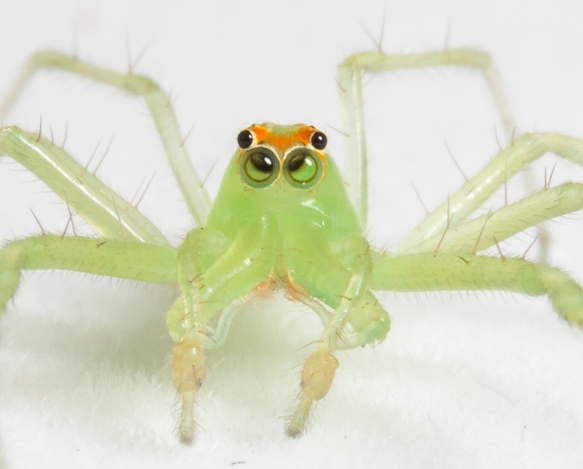Magnolia Green Jumper on white background close up